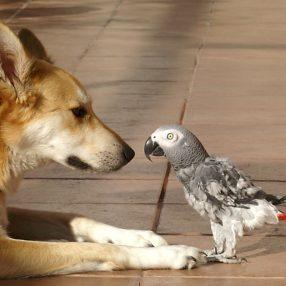 hond en vogel vriend